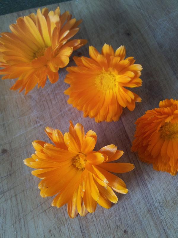 Calendulaflowers
